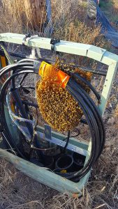 Bees in utility box