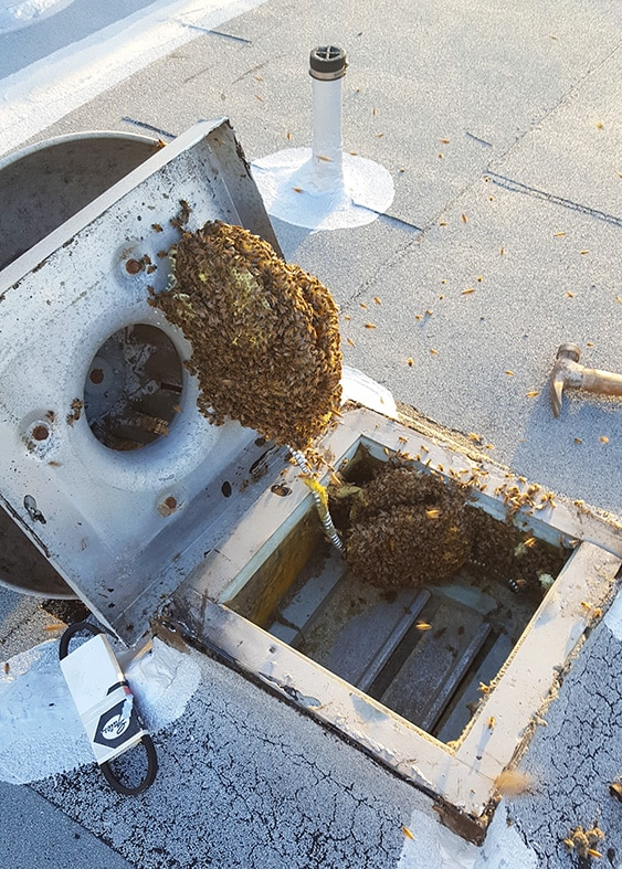 Bees in a vent