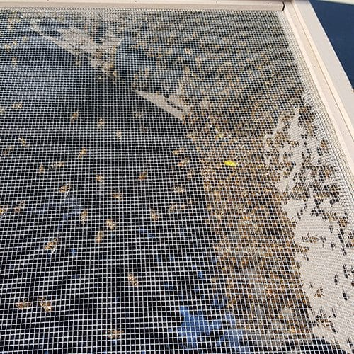 Bee Removal Menifee