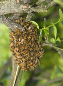 Bee removal in Fontana