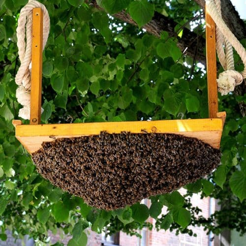 Bee Removal Jurupa Valley CA