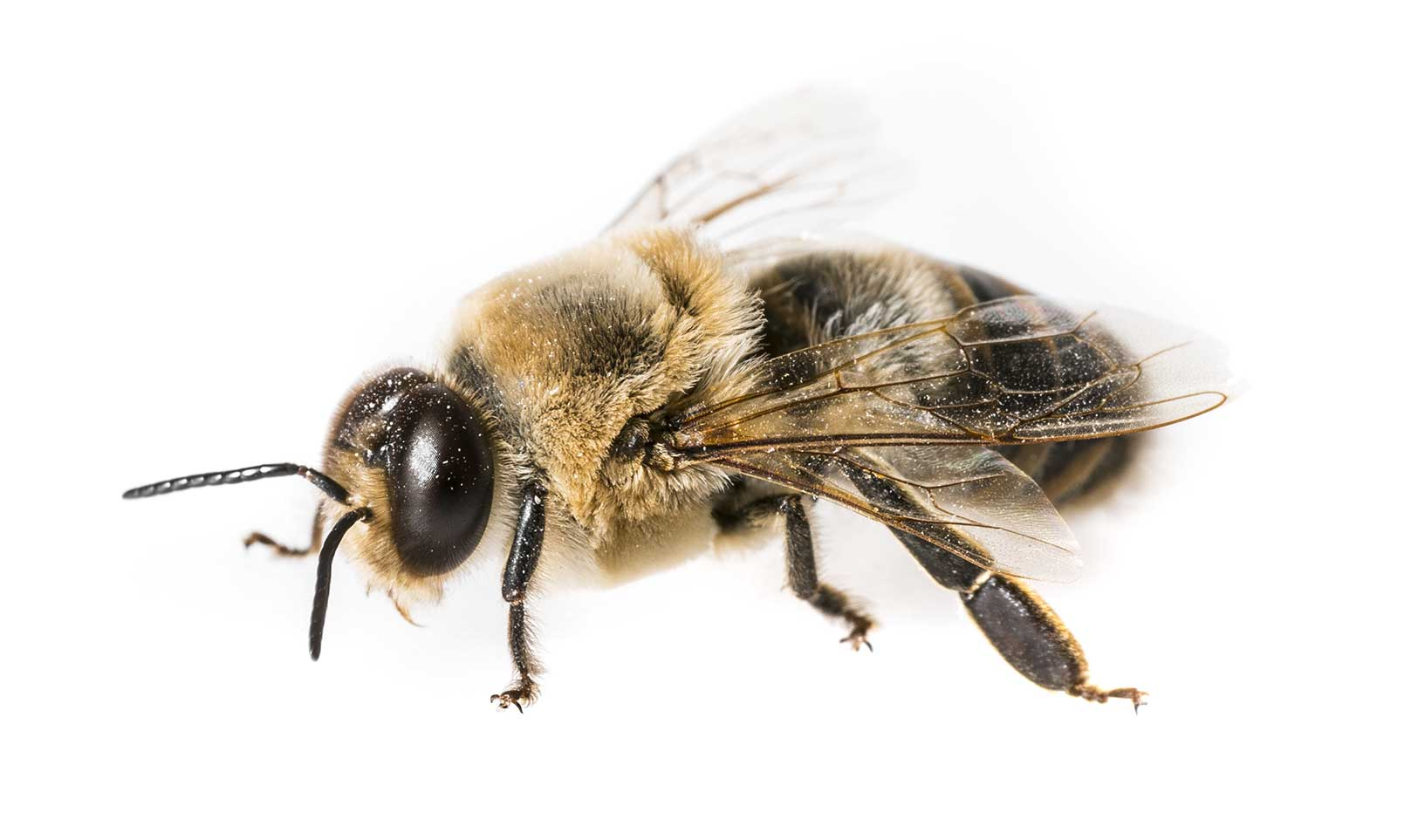 Oceanside Bee Removal Services