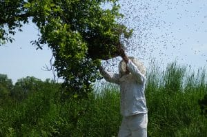 are bees in danger of dying out riverside bee removal pros