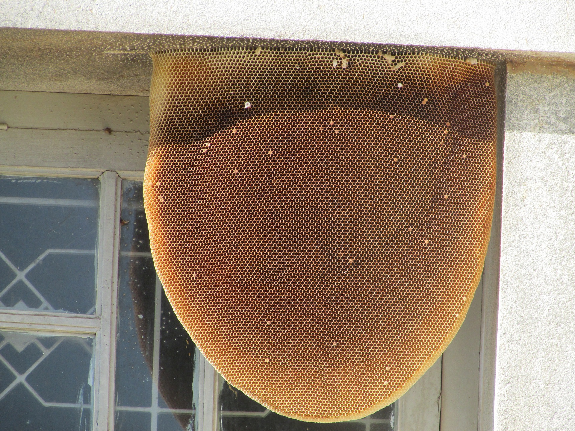 find a hive on your property riverside bee removal pros